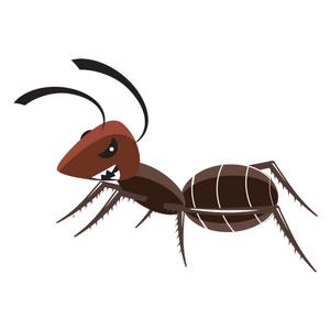 Lotta alle formiche e insetti striscianti