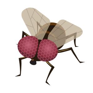 Lotta alle mosche e altri insetti